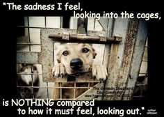 animal shelters, adopt, dogs, cats