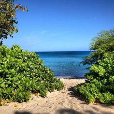 Hawaiian morning by sf eyes, via Flickr - Waialea Beach