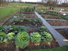 2017 01220008 Allotment Design Layout Planner Ideas Inspiration Gardening Path