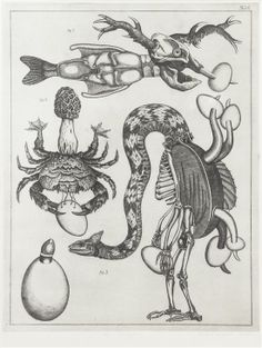 Lot 2792  Jan Svankmajer  (Czech, b. 1934)  Untitled (Crab), 1973  etching  edition H.C., signed Svankmajer, dated and inscribed (lower cent...