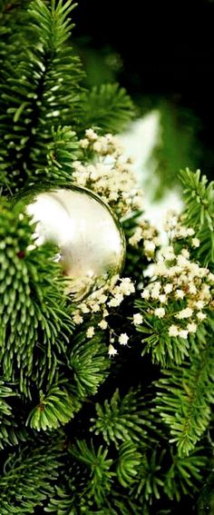 Green Christmas❊**Winter Blessings**❊ ~ ❤✿❤ ♫ ♥ X ღɱɧღ ❤ ~ Wed Dec 20142014 Christmas Makes, Merry Little Christmas, Merry Christmas And Happy New Year, Green Christmas, Christmas Colors, Beautiful Christmas, Winter Christmas, Christmas Home, Xmas