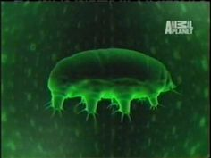 Animal Planet's Most Extreme Animals Water Bear (micro creature) may be the clue to future space travel!