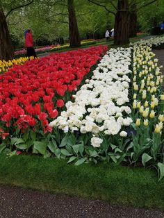 Keukenhof, magnifique parc à tulipes en Hollande