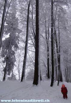 Freezing winterwonderland.  #felsenegg #adliswil #winter Frozen, Snow, Winter, Outdoor, Winter Time, Outdoors, Outdoor Games, Human Eye, Frozen Movie