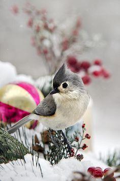 Christmas Titmouse by Christina Rollo