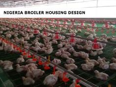 Optimal sanitation, space and environmental control are critical to establishing a profitable broiler operation in Nigeria. Farming Guide, Poultry, Environment, Space, Design, Floor Space, Backyard Chickens, Design Comics