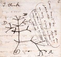 Premier croquis par Darwin d'un arbre du vivant : arbre de l'évolution des espèces vivantes à partir d'un ancêtre commun - arbre phylogénétique. Extrait du First Notebook on Transmutation of Species,1837 | Cambridge University Library.