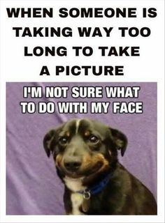 After a few moments of waiting, I'm not sure it's a smile anymore! #funny #dogs