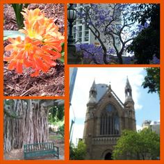In the Botanical garden and downtown Brisbane