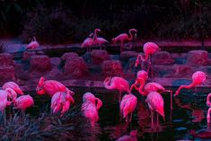 pink, flamingo, and animal image Vaporwave, Its Ok To Cry, San Diego Zoo, Glass Animals, Were All Mad Here, Pink Aesthetic, Pink Flamingos, Alice In Wonderland, Techno
