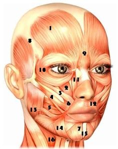 lifting exercises for the forehead, eyes, nose, cheeks, mouth, jowls
