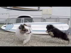 Cute Dogs Playing at the RV - YouTube  |  www.craigsmithrv.com