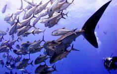Similan Dive Center™ Khao Lak - Google+