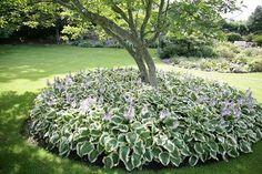 Den vedligeholdelsesfri have – Havearkitekt Frank Kirkegaard Japanese Garden Plants, Japanese Garden Design, Outdoor Landscaping, Outdoor Gardens, Amazing Gardens, Beautiful Gardens, Planting Plan, Black Garden, Colorful Garden