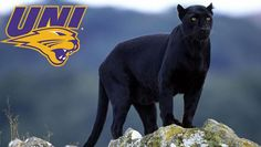 UNI To Add Live Panther As Part Of Game Day Experience