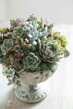 succulent arrangement -Beautiful succulent arrangement - Know What Gurus Think About Assorted Succulents 79 115 unique and beautiful container garden ideas page 3 Succulents In Containers, Container Plants, Cacti And Succulents, Planting Succulents, Container Gardening, Planting Flowers, Succulents Wallpaper, Succulents Drawing, Flowers Garden