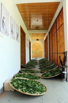 Wuyi rock tea procession: Liang Qing