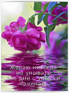 "Photo from album ""МОЯ АНИМАЦИЯ"" on Yandex. Amazing Flowers, Beautiful Roses, Beautiful Gardens, Good Morning Gif, Good Morning Greetings, Yellow Roses, Red Roses, Butterfly Art, Happy Day"