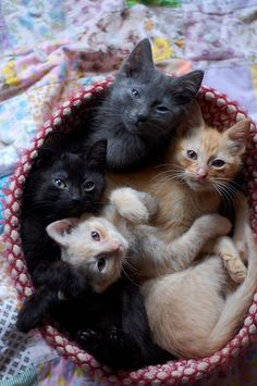 A kitty basket! (maybe by now I should just have a category devoted to kittens....)