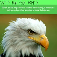 WTF Fun Facts is updated daily with interesting & funny random facts. We post about health, celebs/people, places, animals, history information and much more. New facts all day - every day! Wow Facts, True Facts, Funny Facts, Weird Facts, Crazy Facts, Random Facts, Interesting Information, Interesting Facts, Awesome Facts