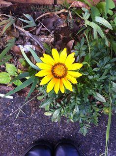 like a tiny sunflower :3