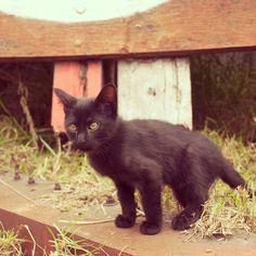 Cute Cats, Animals, Gatos, Animales, Animaux, Animal, Cat, Animais, Kitty