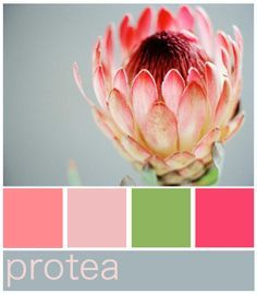 Protea Colour Palette