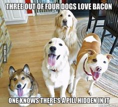 She is one clever girl. #dog#bacon #9gag @9gagmobile