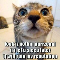 The Real Reason Your Kitties Wake You Up In The Middle Of The Night. http://cheezburger.com/9027867392