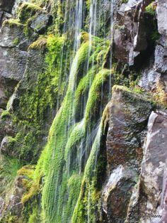 Sammalet viihtyvät Pyhänkasteenputoksella. Waterfalls, Finland, Places To Go, National Parks, Scenery, Adventure, Landscape, Country, Simple