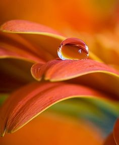 36 Ideas flowers photography pictures close up photography flowers 63331938497174245 Macro Photography Tips, Water Drop Photography, Close Up Photography, Photography Flowers, Dew Drops, Rain Drops, Flower Close Up, Fotografia Macro, Water Droplets