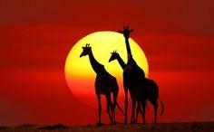 Kenya Safari by PRASIT CHANSAREEKORN, via 500px