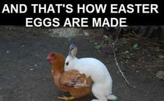 Funny Easter Jokes: Check our Latest and Awesome Collection of Funny Easter Jokes For Adults, Kids, Friends & Family, Funny Easter Religious Jokes, Funny Easter Bunny Jokes Happy Easter Meme, Easter Bunny Jokes, Funny Easter Jokes, Easter Quotes Images, Funny Easter Pictures, Meme Pictures, Funny Photos, Funny Animal Memes, Funny Dogs