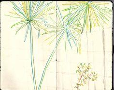 Plant color pencil drawing by Karoliina Pärnänen, 2016.