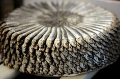 Neatly stacked sardines are on display at a stand in Italy's Slow Fish event in Genoa on May 28, 2011.