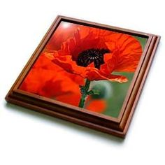 """Yves Creations Florals and Bouquets - Beautiful Red Poppy - Trivets        Dimensions: 8"""" H x 8"""" W x 1/2"""" D     Functional and decorative     Made out of Solid wood     Inset high gloss 6"""" x 6"""" ceramic tile.     Corner foam pads keep surfaces scratch free"""