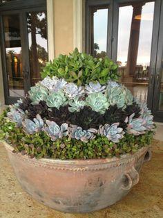 Succulent planting- Beautiful
