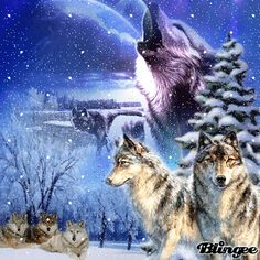 Blingee Wolves | ... wolves blingees 3rd wolves blingee tags animals snow snowy wolf wolves