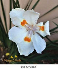 17 Ideas De Flores Flores Plantas Nombres De Flores