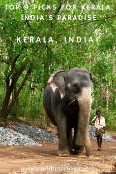Geographically, the state of Kerala is a narrow strip of land along the Arabian Sea and bordered by the Western Ghats to the East. Its fortunate geographical location made Kerala a green paradise of coconut groves, paddy fields, a maze of backwaters, coffee and tea plantations, ayurveda and many other.