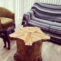 Polished #monkeypuzzle stump has found its forever home. Www.planks2tops.vpweb.co.uk