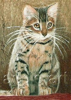 ACEO print limited edition tortoiseshell kitten cat by Anna Hoff