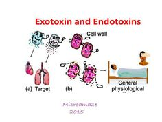 Microamaze: Difference between Exotoxin and Endotoxin