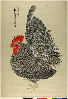 Sketch. Cockerel. Ink and colours on paper.-Japan-1842