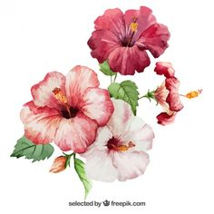 Flores de hibisco Watercolor                                                                                                                                                                                 Mais Watercolor Free, Watercolor Flowers, Watercolor Paintings, Drawing Flowers, Realistic Flower Drawing, Tropical Flowers, Hibiscus Flowers, Hibiscus Bush, Rose Flowers