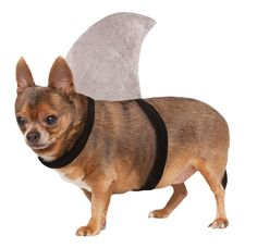Rubies Costume Shark Fin Dog Costume * Click image to review more details. (This is an Amazon affiliate link)