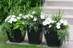 These are my flower pots I put together in early spring. Love the combination of green, white and black.