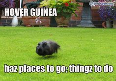 hover pig
