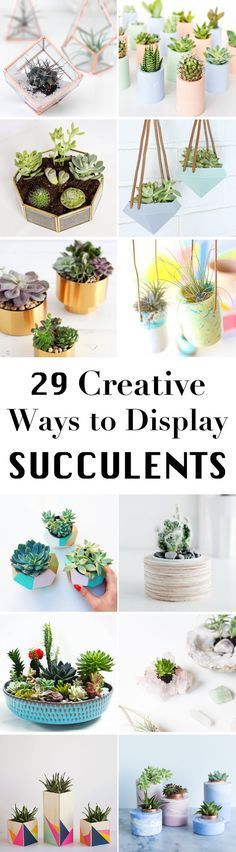 plants are perfect for decorating your home. Here are 29 ridiculously cute and easy DIY succulent planter ideas.Succulent plants are perfect for decorating your home. Here are 29 ridiculously cute and easy DIY succulent planter ideas. Succulent Planter Diy, Cacti And Succulents, Planting Succulents, Planting Flowers, Planter Ideas, Succulent Ideas, Diy Planters, Succulent Display, Succulent Garden Diy Indoor