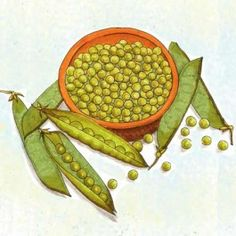 Little Marvel Garden Pea:  Heirloom, Certified Organic  60 days. Vigorous bush plants, heavy yields and fine-flavored peas. A great home garden variety. An heirloom from 1908.  Resistant to fusarium wilt. An old dependable variety.